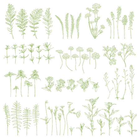 Set of hand drawn herbs. Ink graphic. Vector wildflower.