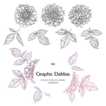 encyclopedias: Hand-drawn ink dahlias. Isolated floral elements. Vector graphic flowers on white background. Collection contour buds, leaves dahlias.