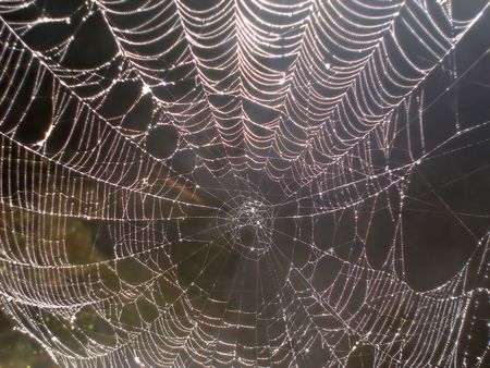 Spider Web with Sparkling Pearls of Dew. Stock Photo - 477921