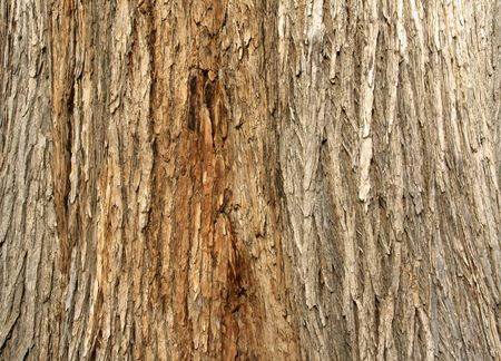 gray texture: Close up of the rough texture of tree bark, suitable for backgrounds and layering with other images.