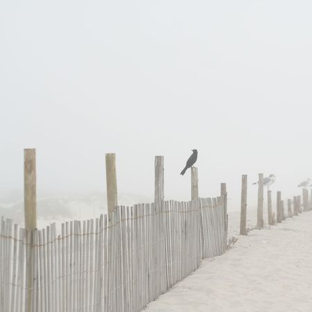 Shore Bird at the Beach on a Foggy Morning on a Fence Post Stock Photo
