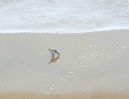 Shore Bird at the Beach on a Foggy Morning Stock Photo