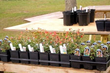 Potted plants ready to be sold or planted in a spring garden.
