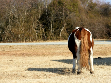 The rear view of a pony who would not turn around for the photograph.