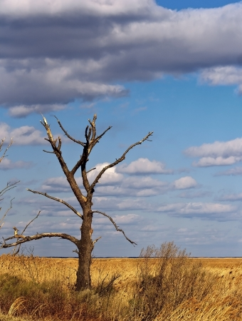 Lone, bare tree that appears to be dead in the marsh near Delaware Bay. Stock Photo