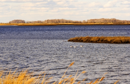 Marsh scene near Delaware Bay on a cold, winter day. Stock Photo