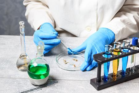Selection Laboratory. Breeder with Petri dish. Plant breeding. Stock Photo
