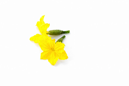 Flower and ovary of young cucumber on white background