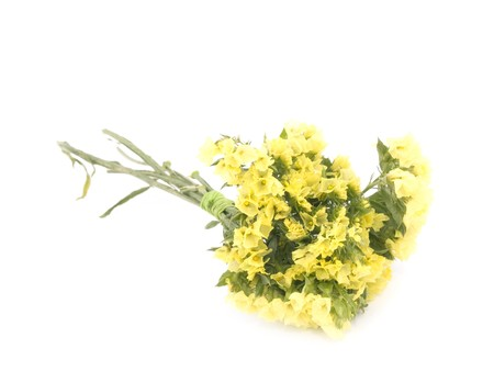 Small bouquet of yellow statice flowers on white background stock small bouquet of yellow statice flowers on white background stock photo 8127588 mightylinksfo