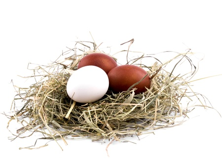 Two brown and one white easter eggs in nest on white background photo