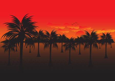 작은 숲: Coconut grove at sunset