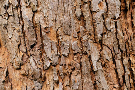 tree bark in the background. abstract nature background. Stock Photo