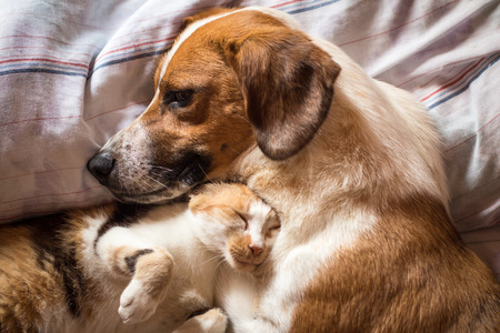 Dog and cat wake up hugging from a nap Stock Photo