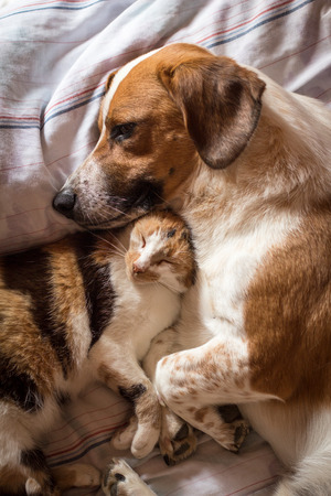 cats: Dog and cat wake up hugging from a nap Stock Photo
