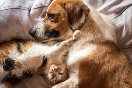 cat: Brown dog and cat wake up hugging from a nap Stock Photo