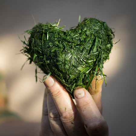 cut the grass: Hand holds heart shaped out of fresh cut grass
