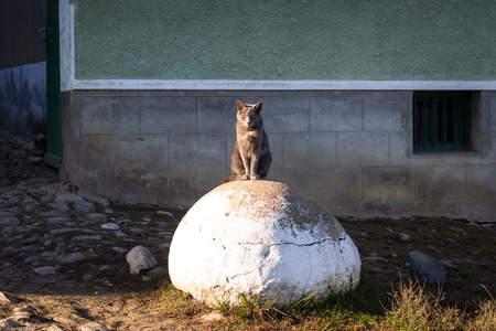 mean: Mean, tough looking cat sits on big rock in front of house Stock Photo