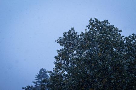 precipitacion: La nieve cae sobre el árbol de la noche