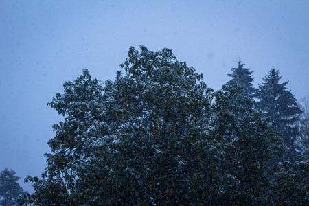 precipitacion: La nieve cae sobre árboles en la tarde