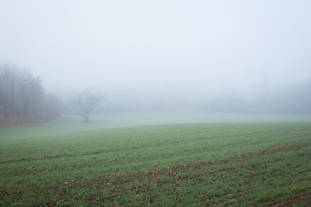 french countryside: Agriculture field in fog, in French countryside Stock Photo