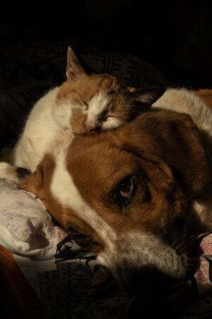 Cute dog and cat are chilling together in bed Stock Photo