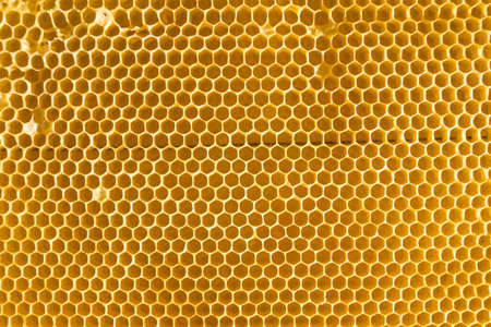 Empty Bee honeycomb. Cells where bees make honey. Texture of bee hexagons. Background for beekeepers