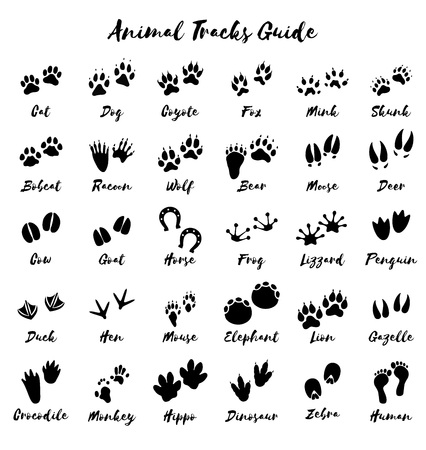 Animal tracks - foot print guide Ilustracja