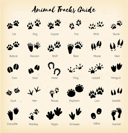 Animal tracks - foot print guide vector Vectores