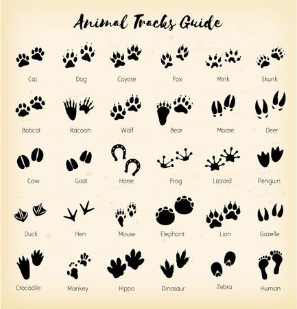 Animal tracks - foot print guide vector Illustration