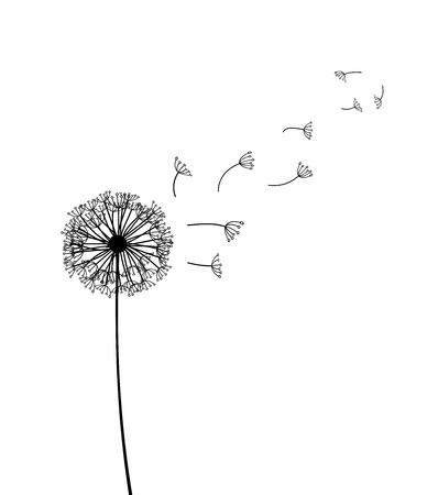 dandelion vector Stock Photo