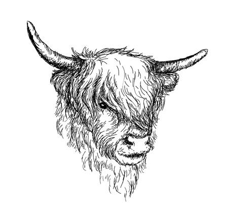 """Ilustracja przedstawiająca piękne szkockie zwierzę wiejskie - Hairy Cow """"Hairy Coo"""" z Highlands VECTOR"""