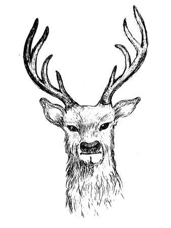 Deer head hand drawn illustration vector sketch
