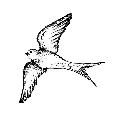 Hand drawn swallow illustration vector Çizim