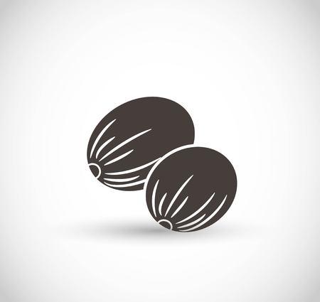 Nutmeg vector icon