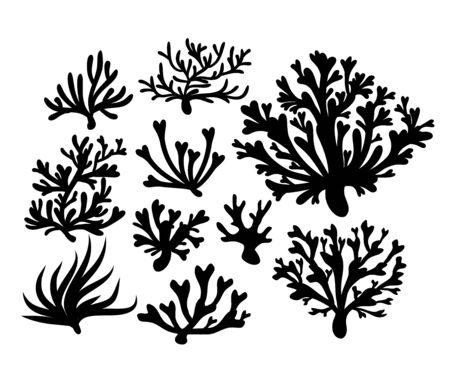 Coral vector set illustration, icon set Ilustracja