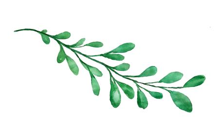 Beautiful watercolor branch isolated, vector