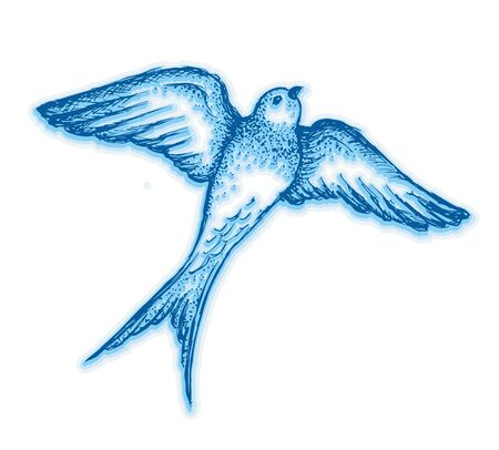 Hand drawn swallow illustration vector 向量圖像