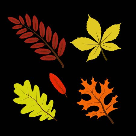 Set of colorful vector autumn leaves  イラスト・ベクター素材