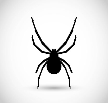 Spider vector illustration, isolated on white
