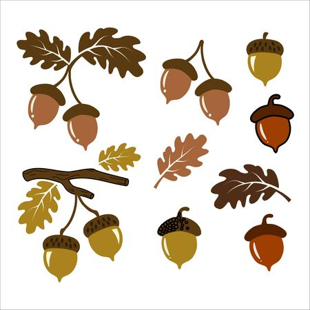 Acorn vector illustration set art