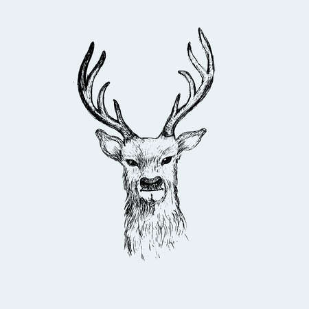 Deer head hand drawn illustration vector sketch