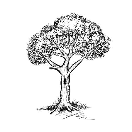 Beautiful hand drawn tree vector illustration