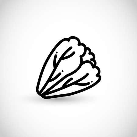 Lettuce vector thin line style icon