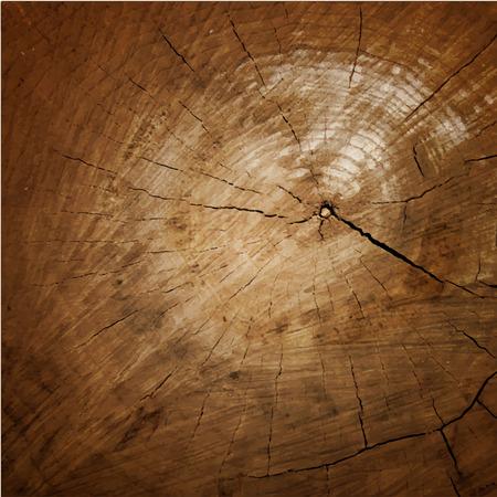 Wood texture Tree rings,  sawing wood.  向量圖像