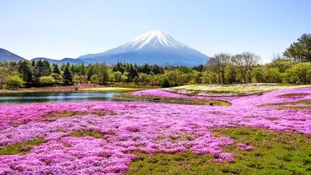 fuji mountain and pink moss