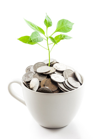 White cup filled with coins and tree photo