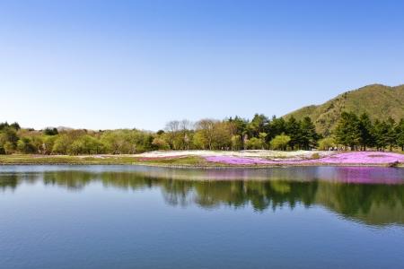 reflection water: bella sakura shiba in acqua riflessione Archivio Fotografico
