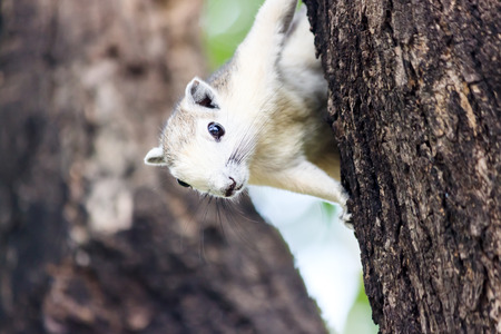 squirrel clinging on a tree  photo