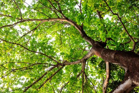 色の背景上の大きな木