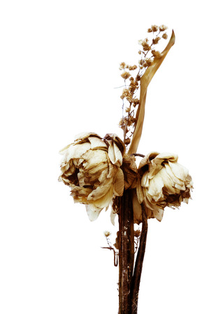 Bouquet of dried lotus  photo